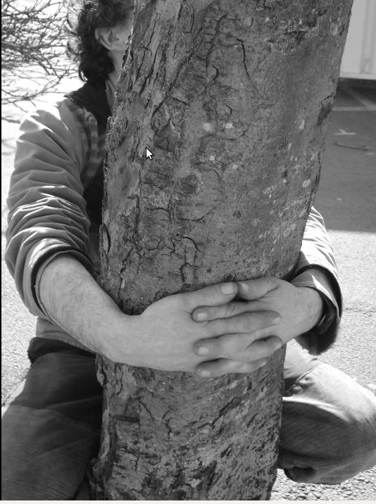 dans les arbres 4